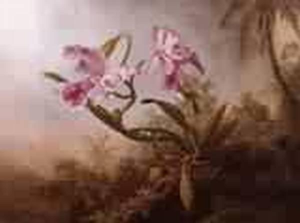 Orchids and Hummingbird 1875jpeg